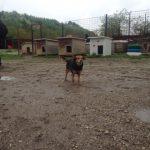 Bild på hund(ar)