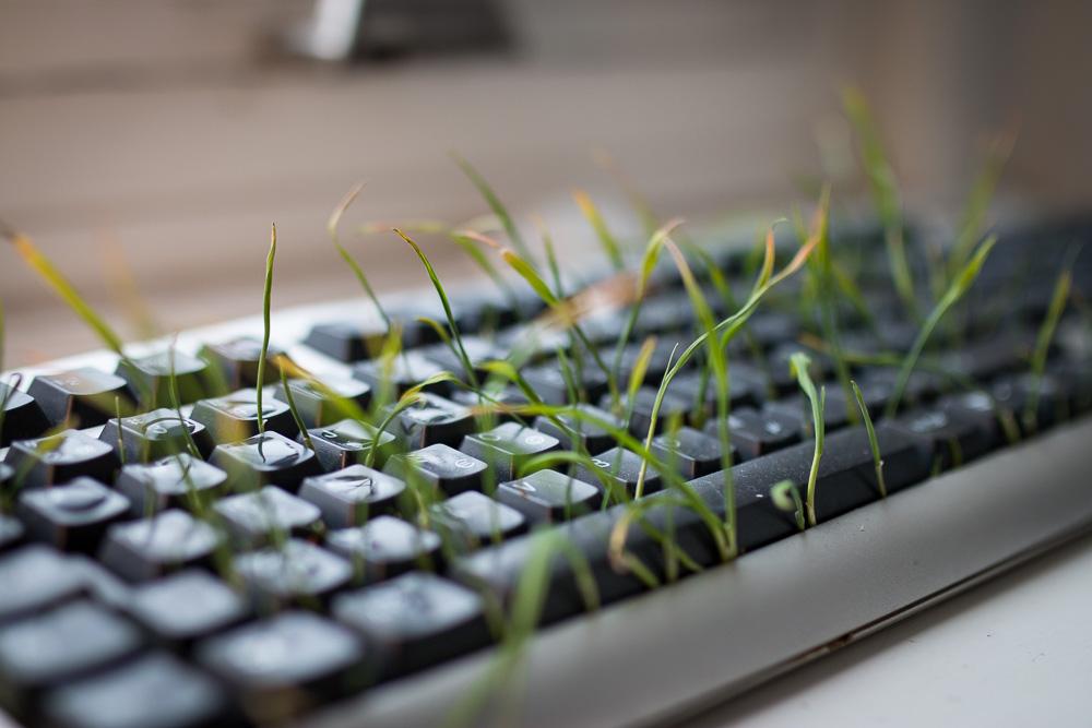 Tangentbord där det växer gräs mellan tangenterna